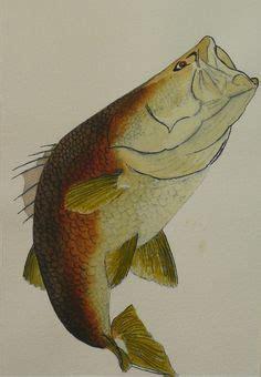 barramundi tattoo designs gallery for gt barramundi fish drawings fish photos