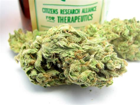 best strain best buds the top 10 strains of 2013 smell the