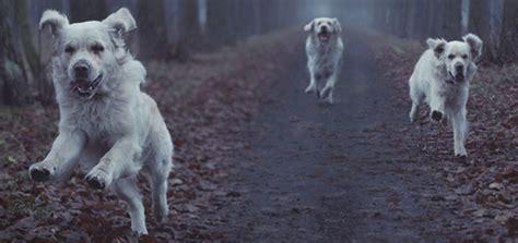 beware  howling dog modern dog magazine