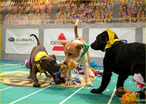 puppy bowl 2017 puppy bowl 2017 meet the dogs the more photo 3853445 2017