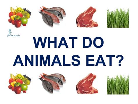 what do puppies eat what do animals eat dogs in the us