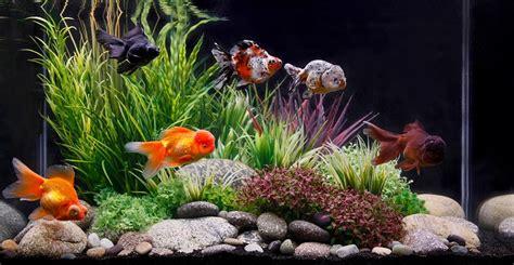 Types Of Aquarium by Best Fish Tank Filters 2017 Reviews Top Picks Amp Guide