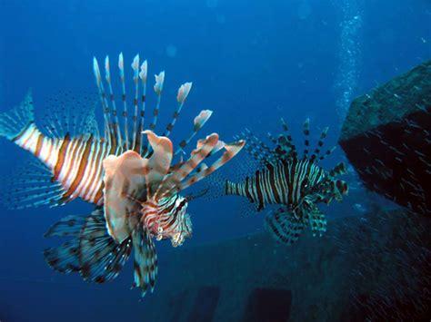 foto dive diving foto