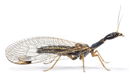 the wings of an insect are attached to this section insects are the great survivors in evolution new study