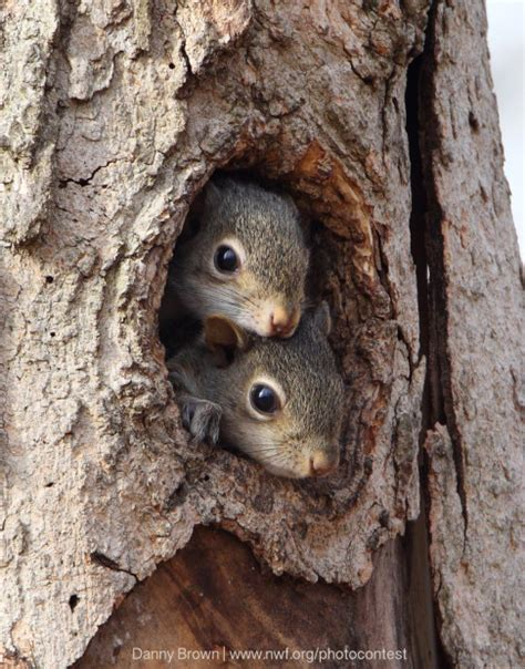 nutty ways to celebrate squirrel appreciation day this