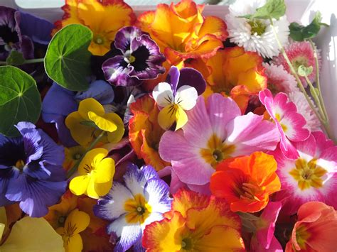 Flowers Uk by Buy Edible Flowers Seasonal Mix Edible Flowers For