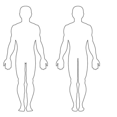 Blank Outline Of Human Body Anatomy Organ Human Template