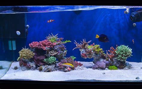 minimalist aquascaping aquarium