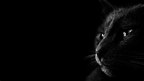 wallpaper jaguar hitam wallpapers black cat wallpaper cave
