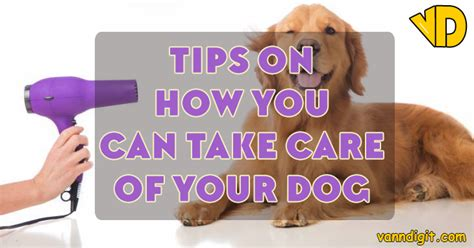 how to take care of a puppy tips on how you can take care of your