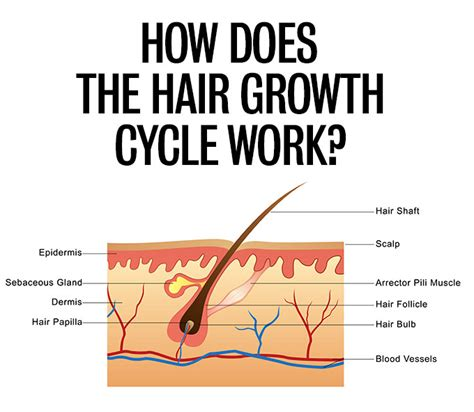 how much does black hair grow in a year how much hair loss is normal for women hair romance