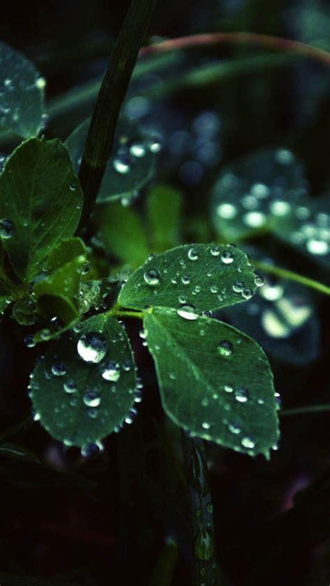 pflanze mit großen blättern die 71 besten hintergrundbilder der natur und wassertropfen