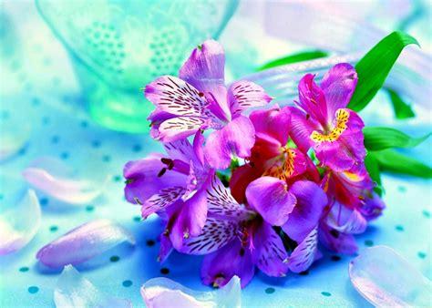 imagenes para fondos de pantalla hermosas interesantes y bonitos fondos de escritorio de flores