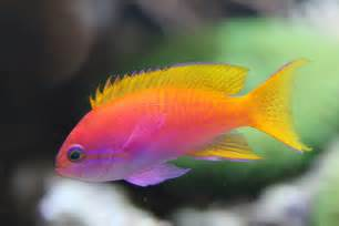 neon colored fish asish s fishes