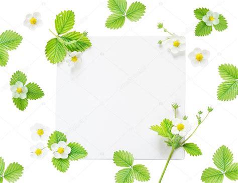 fiori cornici cornici con fiori fiori idea immagine