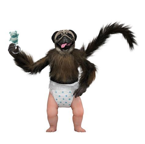 kickstart commercial puppy monkey baby anb media news february 14 2016 anb media publisher of toys family