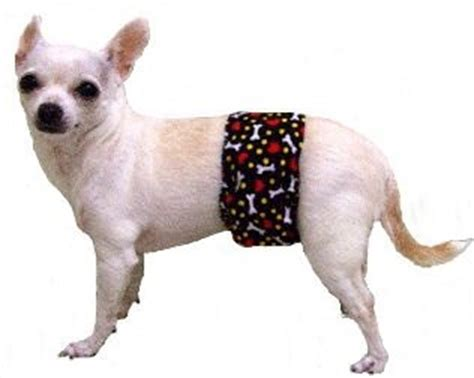 belly bands for dogs my keeps against the living room curtain what do i