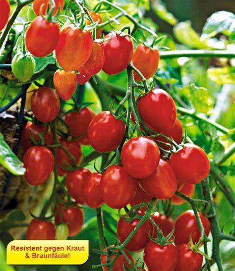 Wie Pflanze Ich Tomaten 4086 by Snack Tomate Romello F1 1a Qualit 228 T Kaufen Baldur Garten