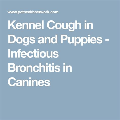 kennel cough in dogs best 25 puppy kennel ideas on kennel ideas