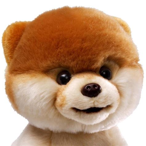 Pictures Of The Cutest Pets by Gund Boo The Worlds Cutest Soft Gund Dogs