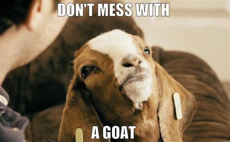 Happy Goat Meme - amish baby goat