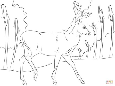 coloring pages of mule deer walking mule deer coloring page free printable coloring