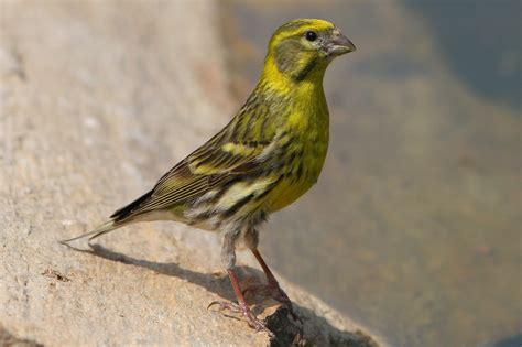 vögel im garten bestimmen verletzter vogel im garten hausidee