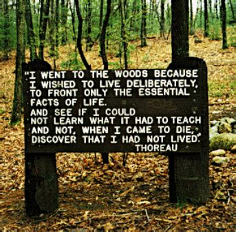 walden pond book quotes the buddhist how henry david thoreau can make