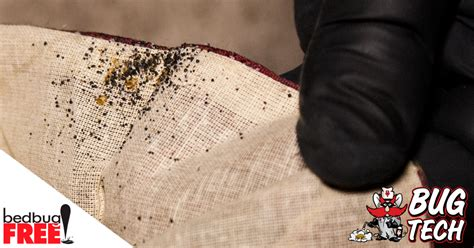 how to know if you brought bed bugs home bed bugs in west texas prevention treatment