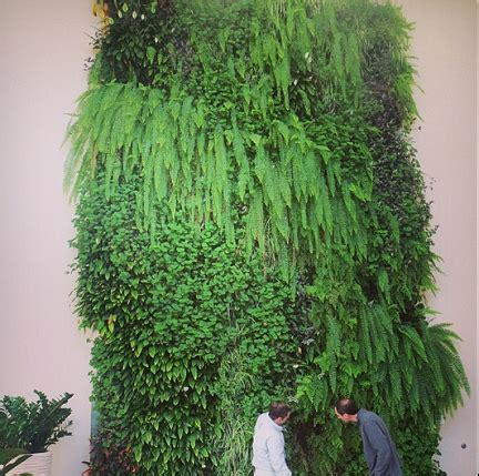 Do It Yourself Archives Living Walls And Vertical Gardens How To Make A Green Wall Garden
