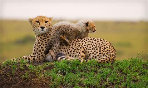 safari with airfare in lake nakuru national park groupon getaways