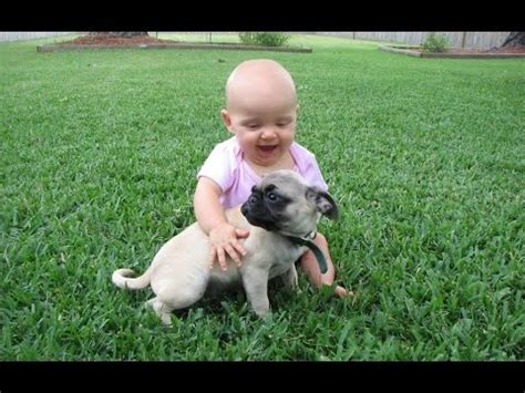 pugs and baby pug and baby compilation 2015
