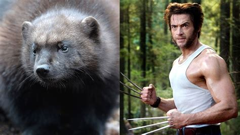 hugh jackman didnt  wolverines  real animals vanity fair