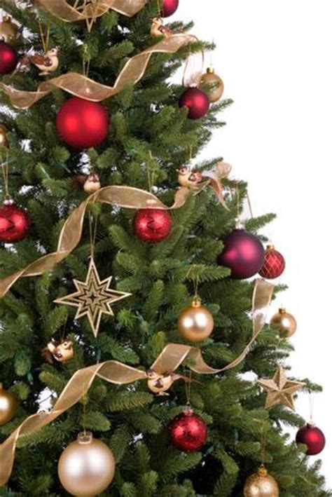 real christmas tree delivery london uk order xmas