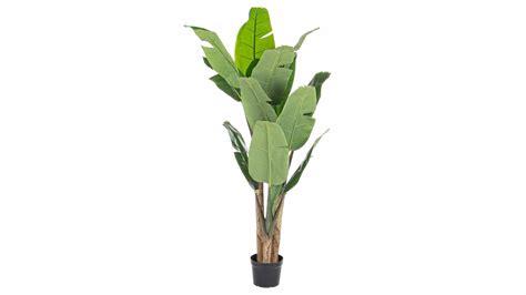 vaso con pianta pianta banano con vaso brico ok corigliano