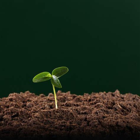 what of soil to buy for vegetable garden premier vegetable topsoil veg soil garden soil