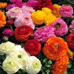 Paper Mache Flowers - ranunculus arnold zwicky s blog