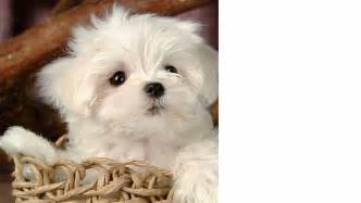 My vote for cutest dog of the year so small and adorable nested in