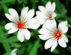 flower types structure flower