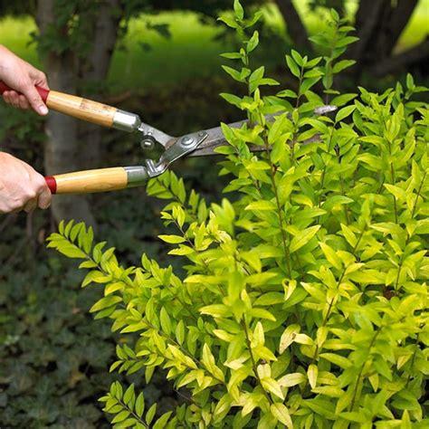 siepi da giardino costi piante da frutta prezzi idee per interni e mobili
