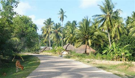 Mba In Tanzania by Pemba Island