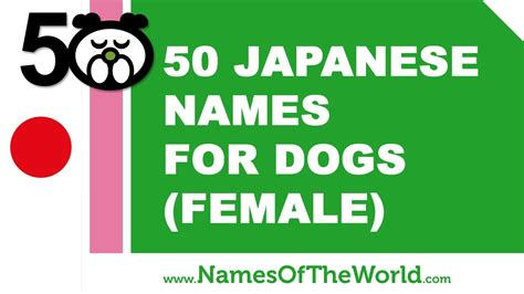best names for dogs 50 japanese names for dogs best names www namesoftheworld net