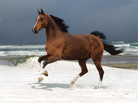 nice hourse beautiful pictures of horses on the shore