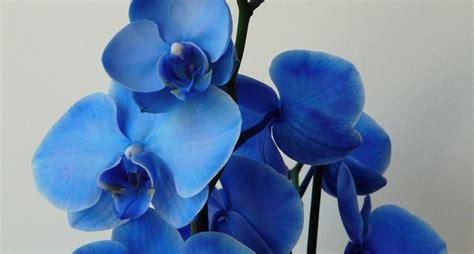 significato dei fiori orchidea significato dei fiori orchidea significato fiori