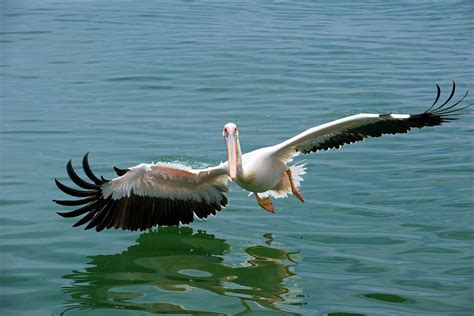 pelican boats zimbabwe experience a zambezi river sunset cruise art of safari