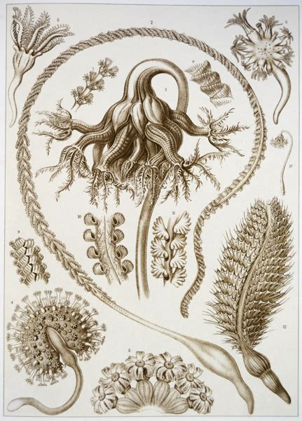 libro art forms in the ernst haeckel e lo stile irraggiungibile di madre natura tu t ti libri io mi libro