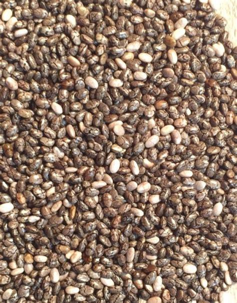 Chia Seeds Black Organic 100 300gr chia4uk organic chia seeds 100 organic black chia seeds