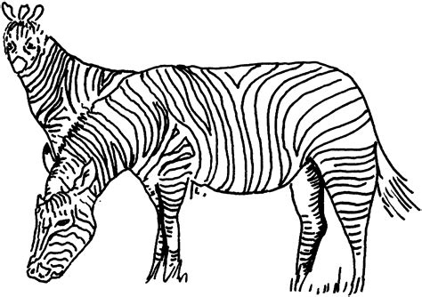 free zebra coloring pages