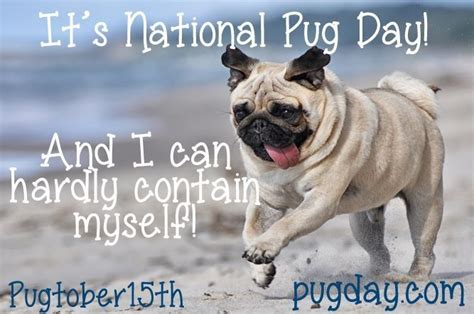 pug day happy national pug day pugs