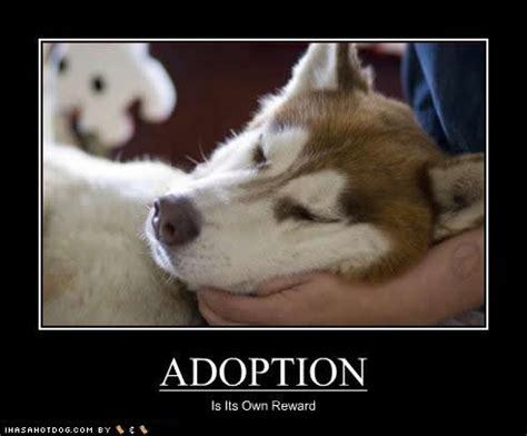 Adoption Meme - cute adoption quotes quotesgram